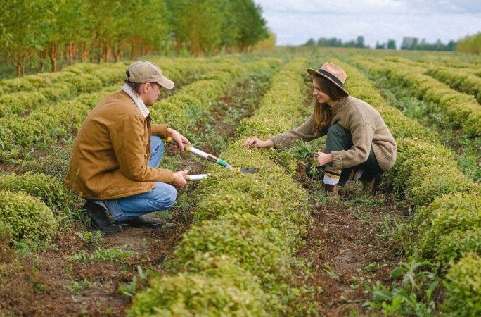 Mevsimlik Çalışan Vizesi Nedir